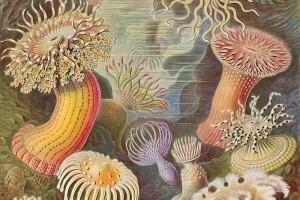 Litografia de Kunstformen der Natur