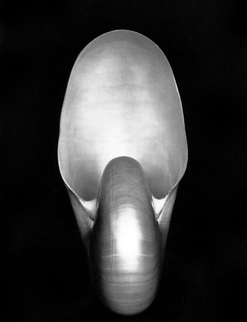 Edward Weston s Nautilus (1927) sold for for $1,082,500 in 2010