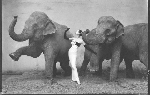 Richard Avedon s photo Dovima with Elephants (1955) sold for $1,151,976 in 2010